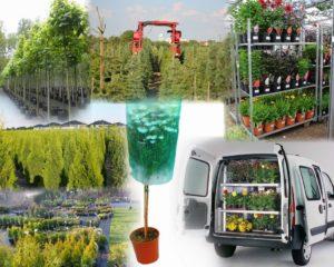 Доставка растений. Питомник растений. Калининград